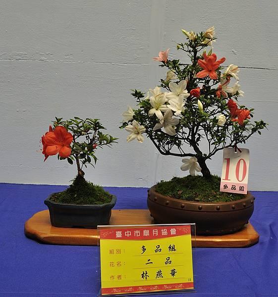 2017台中皋月展_00137.jpg