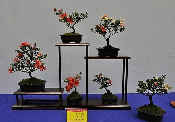 2017台中皋月展_00136.jpg