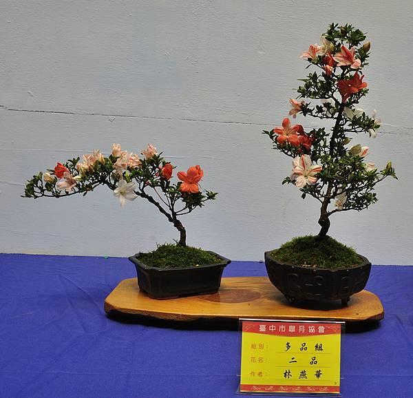 2017台中皋月展_00138.jpg