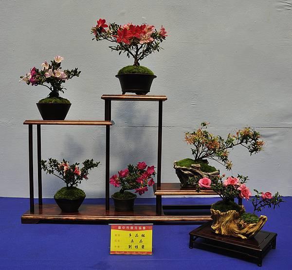 2017台中皋月展_00144.jpg