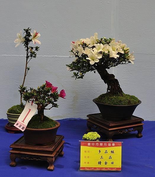 2017台中皋月展_00152.jpg