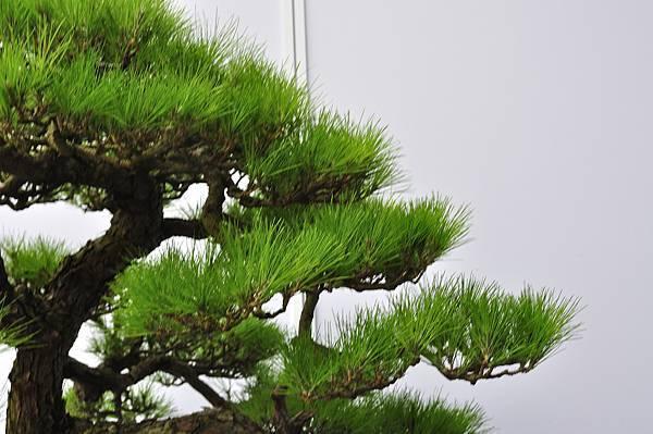 2017明潭松韻大展_00102.jpg