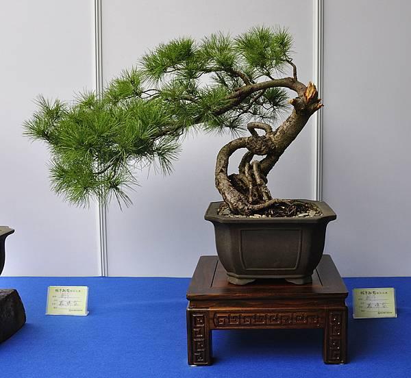 2017明潭松韻大展_00313.jpg