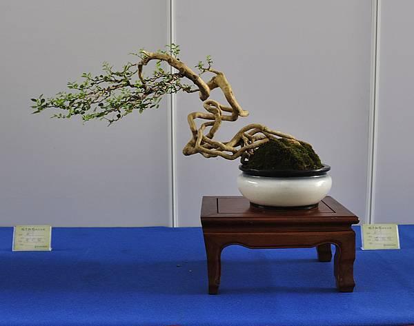 2017明潭松韻大展_00325.jpg