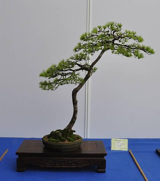 2017明潭松韻大展_00409.jpg