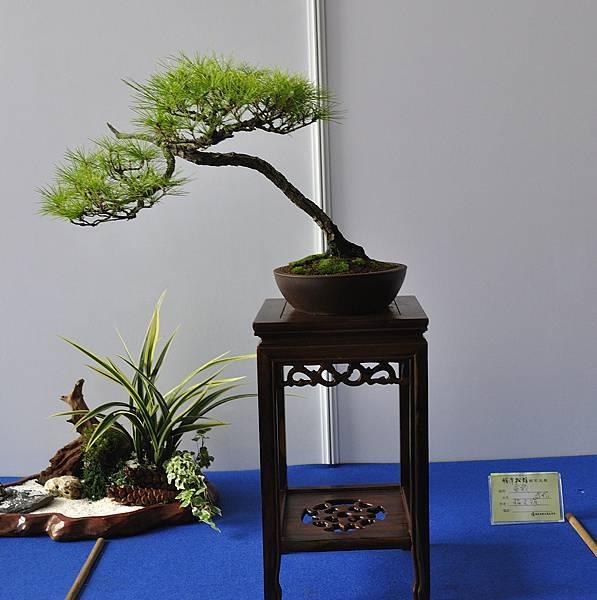 2017明潭松韻大展_00415.jpg