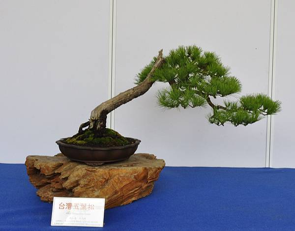 2017台中古榕特展_00025.jpg