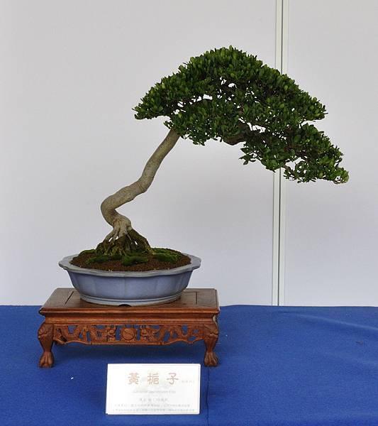 2017台中古榕特展_00027.jpg