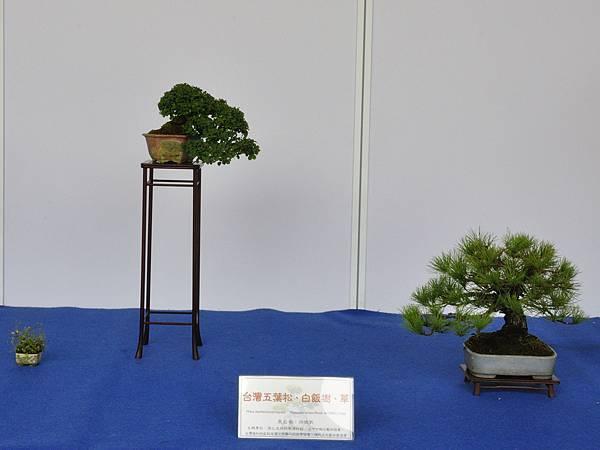 2017台中古榕特展_00035.jpg