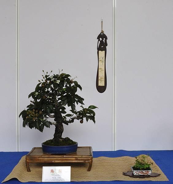 2017台中古榕特展_00056.jpg