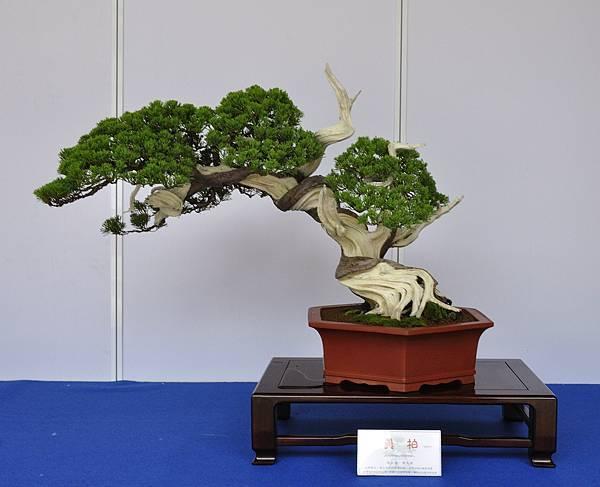 2017台中古榕特展_00003.jpg