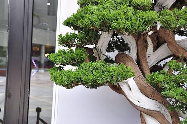 2017台中樹石展_00176.jpg