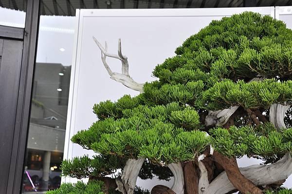 2017台中樹石展_00175.jpg