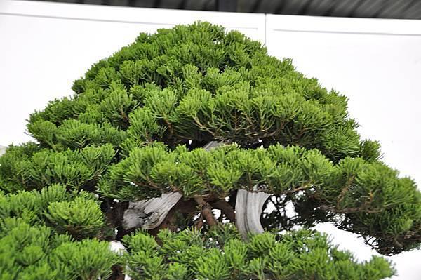 2017台中樹石展_00177.jpg