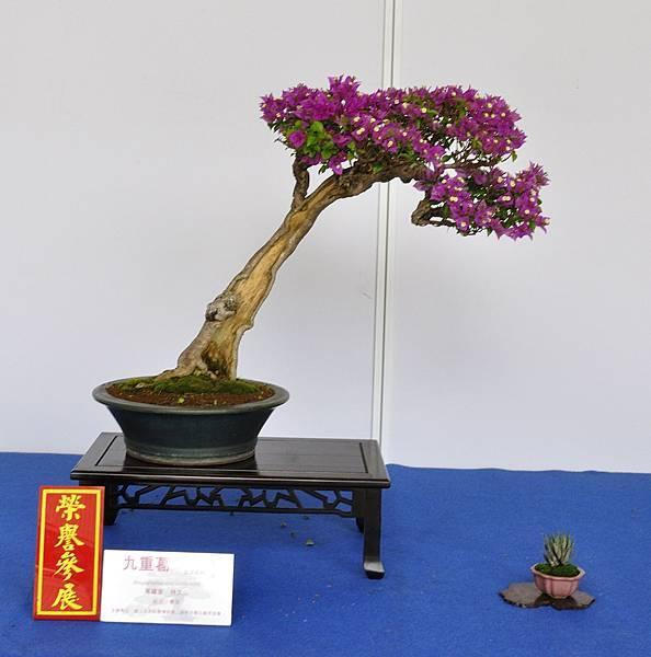 2017台中樹石展_00191.jpg