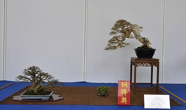 2017台中樹石展_00027.jpg