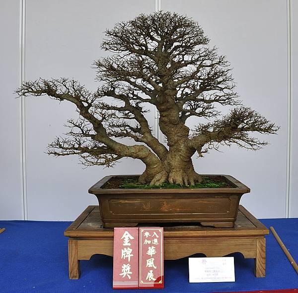 2017台中樹石展_00033.jpg