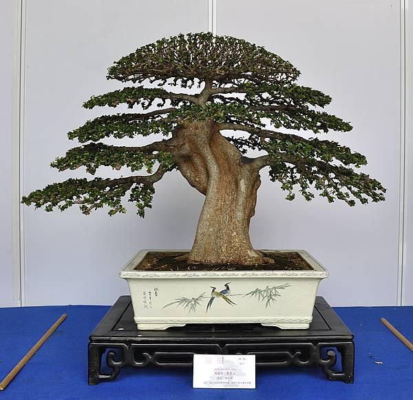 2017台中樹石展_00044.jpg