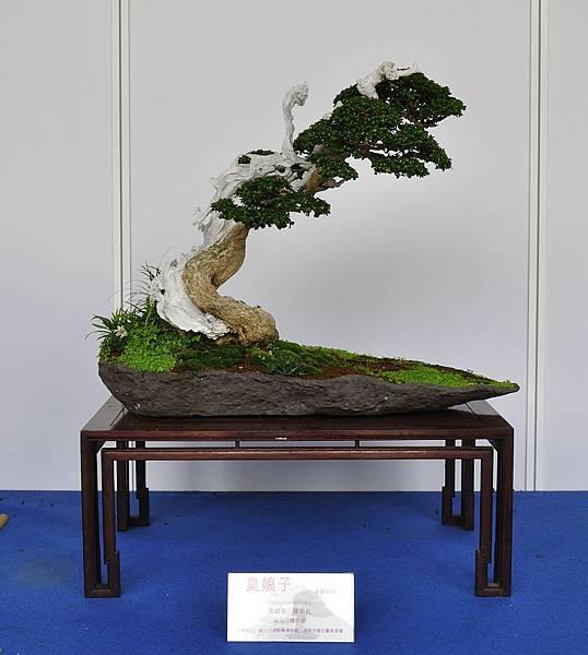 2017台中樹石展_00077.jpg