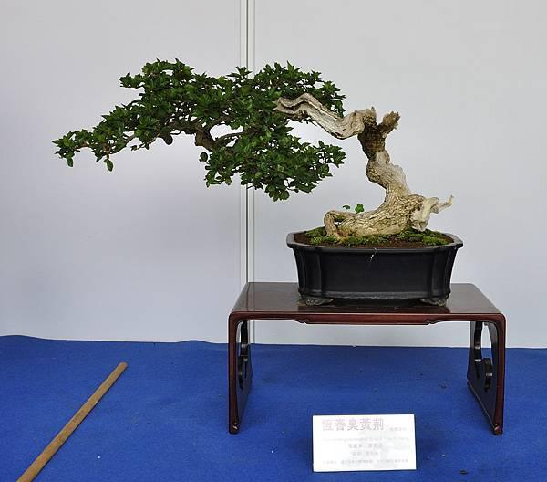 2017台中樹石展_00079.jpg