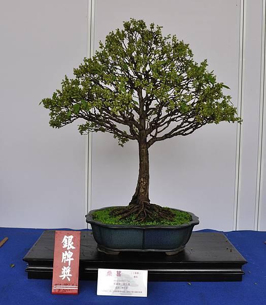 2017台中樹石展_00081.jpg