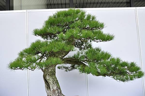 2017台中樹石展_00094.jpg
