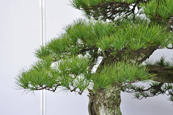 2017台中樹石展_00095.jpg
