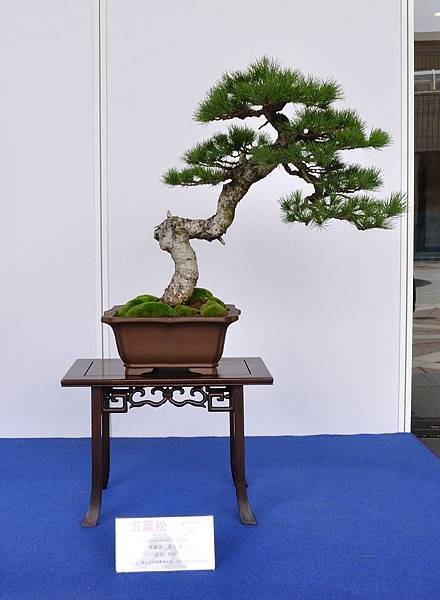 2017台中樹石展_00104.jpg