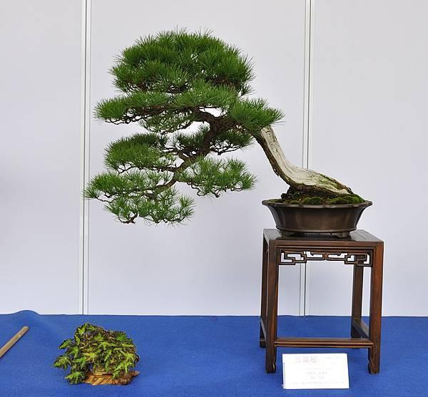 2017台中樹石展_00106.jpg