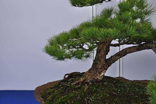 2017台中樹石展_00128.jpg