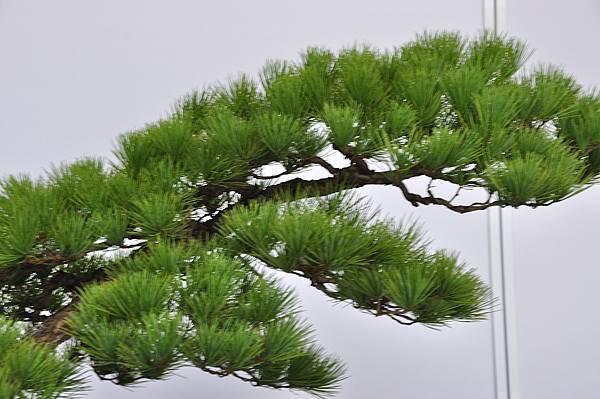 2017台中樹石展_00130.jpg