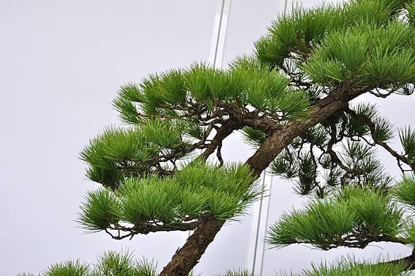 2017台中樹石展_00134.jpg
