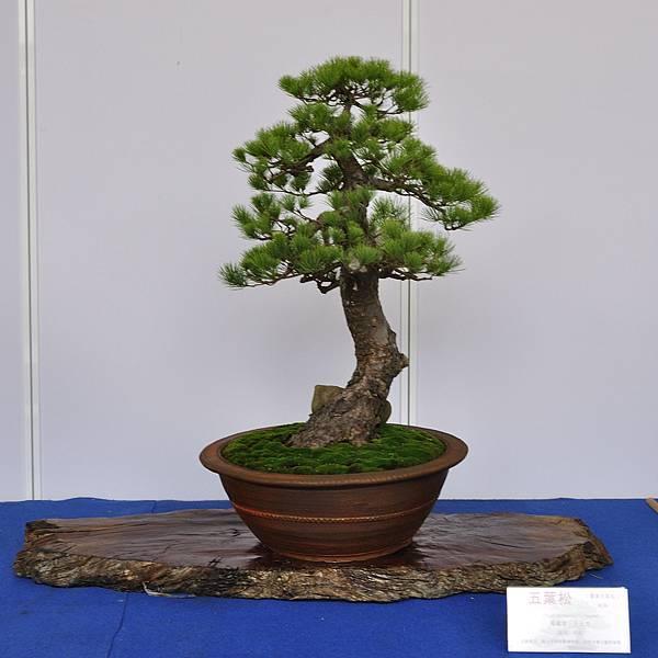 2017台中樹石展_00137.jpg