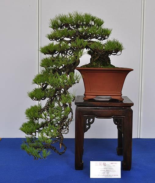 2017台中樹石展_00138.jpg