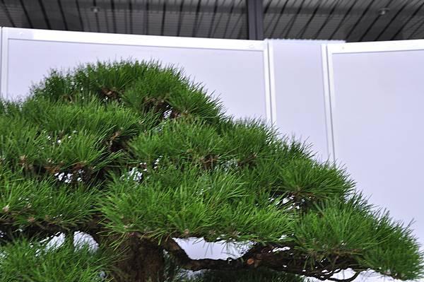 2017台中樹石展_00144.jpg