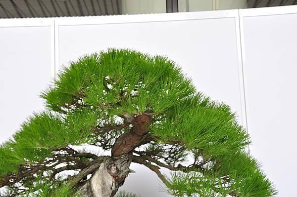 2017台中樹石展_00162.jpg
