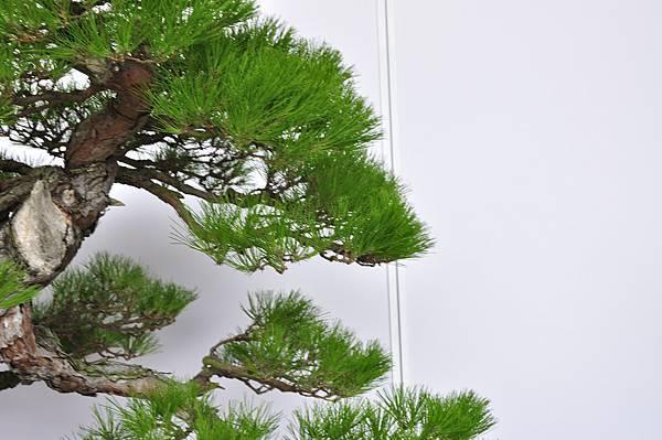 2017台中樹石展_00163.jpg