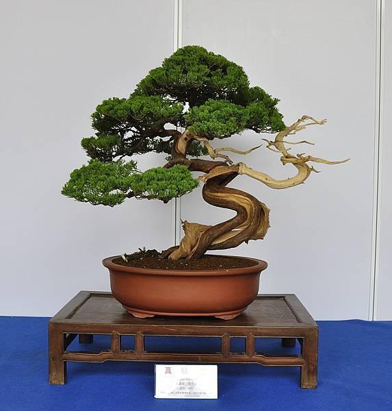 2017台中樹石展_00168.jpg