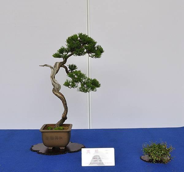 2017台中樹石展_00171.jpg