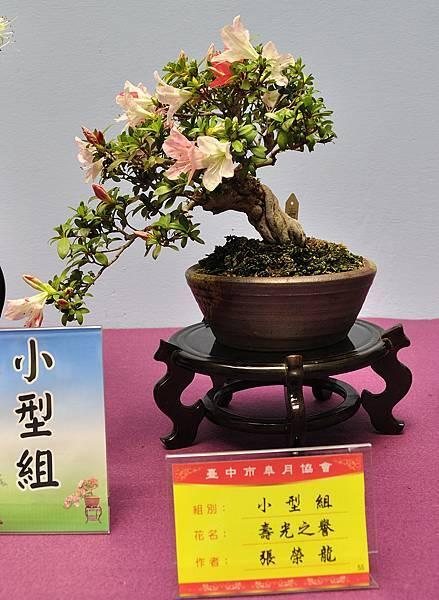2018台中皋月展_00026.jpg