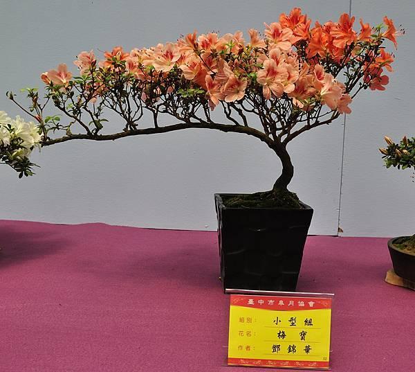 2018台中皋月展_00030.jpg