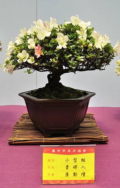 2018台中皋月展_00033.jpg