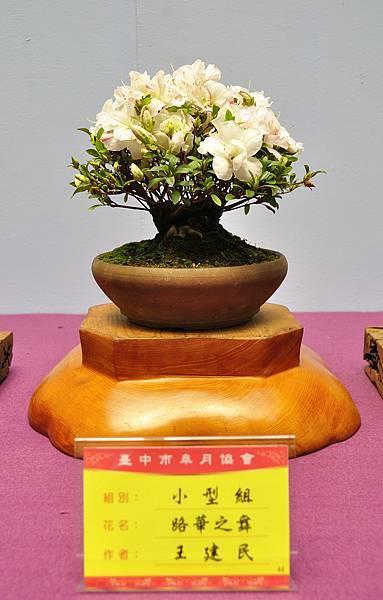 2018台中皋月展_00038.jpg