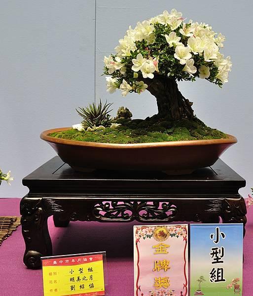 2018台中皋月展_00042.jpg