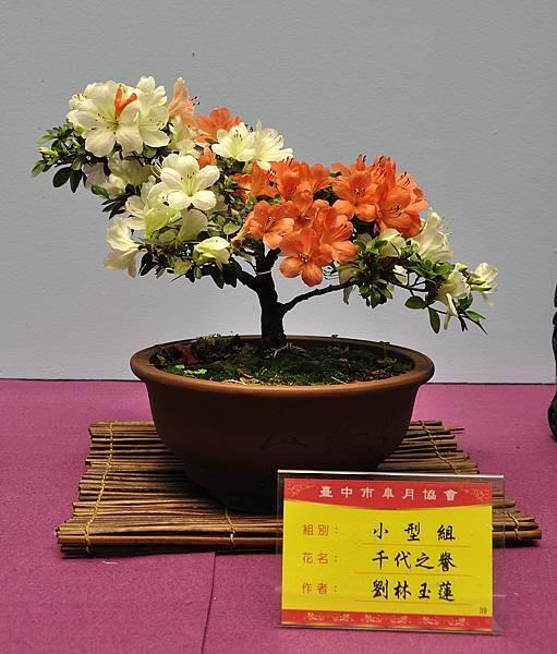 2018台中皋月展_00044.jpg