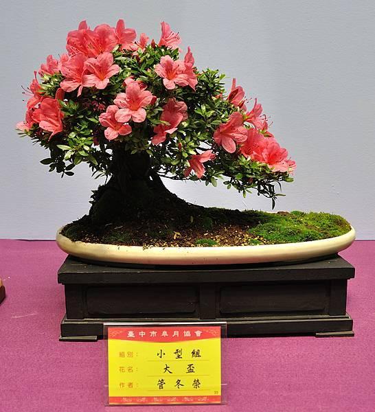 2018台中皋月展_00050.jpg