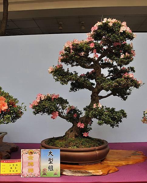 2018台中皋月展_00057.jpg