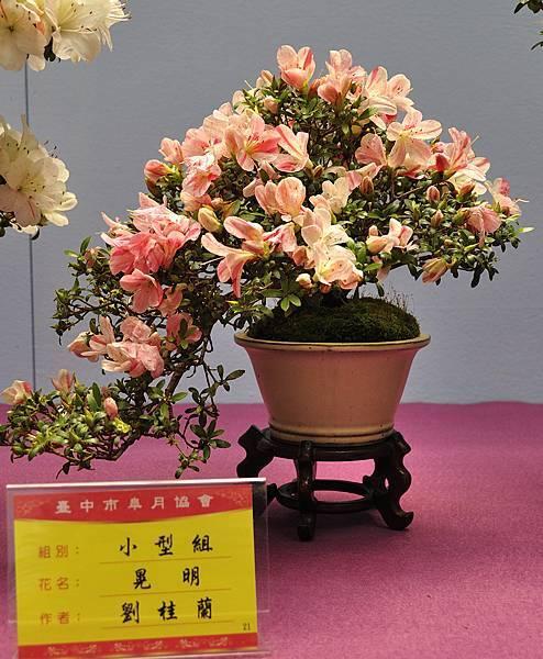 2018台中皋月展_00068.jpg