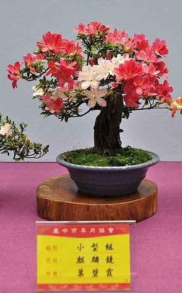 2018台中皋月展_00076.jpg