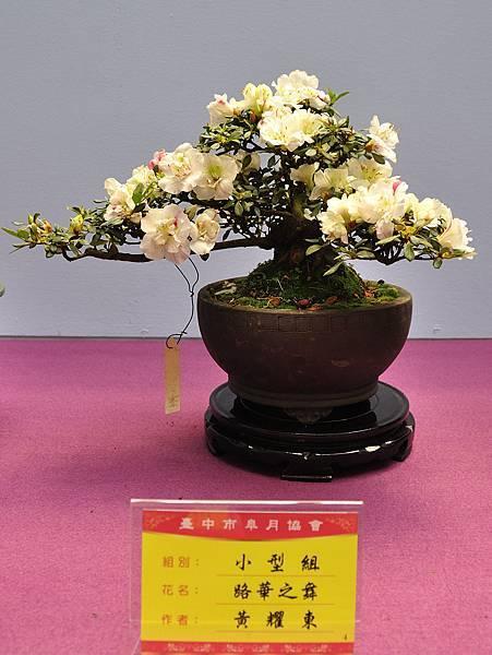 2018台中皋月展_00085.jpg